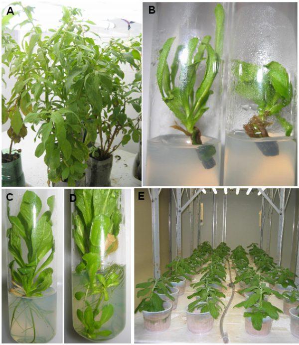 اتاقک رشد گیاه