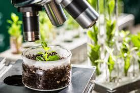 کاربرد اصلاح نباتات