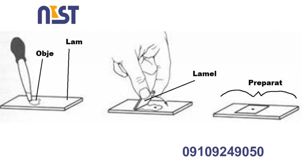 lam and lamel